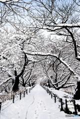 いつもの公園、「雪景色」(2)