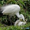 鷺山訪問「育む」