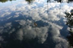 koumo「 蜘蛛、雲に浮かぶ」