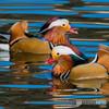極彩色の鳥
