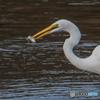 魚喰う鷺(2)