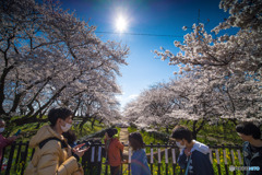 権現堂公園 2020 「水門橋」