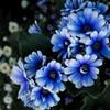 - 青い花には -