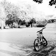 花盛りの公園