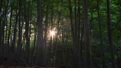 朝日とブナ林