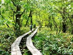 明るい森の中【上高地散策】