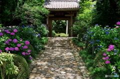 龍潭寺 山門と紫陽花