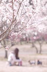 梅の花、ほのかに