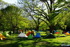 新緑の徳沢キャンプ場 【上高地】