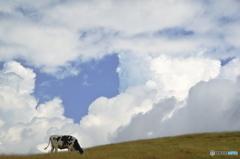 天空の牧場