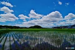 田園風景‐初夏