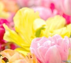 春色ギフトセット