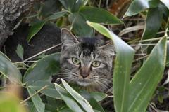 根室半島に猫がいた。