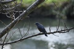 初めての野鳥