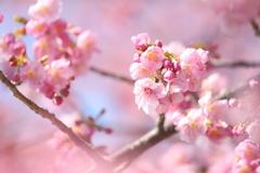 もうすぐ春ですねぇ