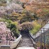 枝垂れ桜と石段と白塀