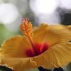 儚き花の芯