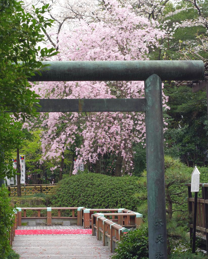 一期一会の桜