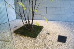 落葉樹の下草