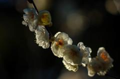 観心寺の春間近③