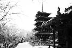 奈良 長谷寺 春⑧