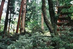 室生寺の初夏⑤