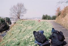 水仙の丘③