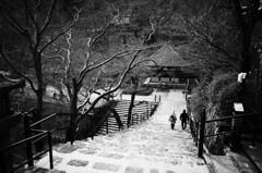 奈良 長谷寺 春⑦