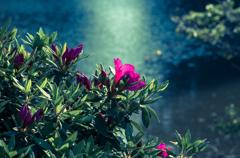 山上池の畔も初夏