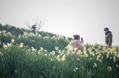 水仙の丘④