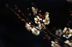 観心寺の春間近①