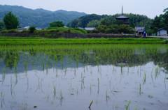 6月の法輪寺