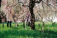 春が来た②