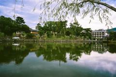 猿沢池夕景