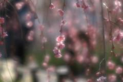 春が来た④