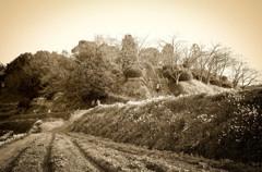 水仙の丘①