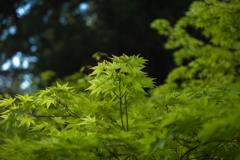 室生寺の初夏⑪