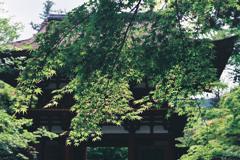 室生寺の初夏⑧