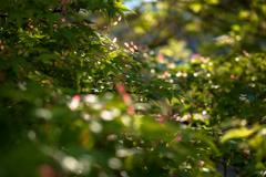室生寺の初夏⑭