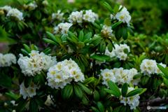 今朝の花 ④