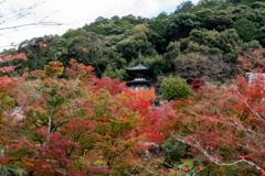 京都紅葉狩り【永観堂:紅葉】①20201123