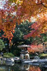 【旧古河庭園の紅葉】④20181201
