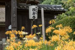 西方寺【茅葺きの山門】20201001