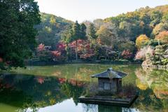 薬師池公園【紅葉の様子】20201115