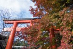 京都紅葉狩り【下鴨神社:紅葉】①20201123