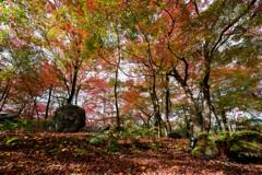 京都紅葉狩り【永観堂:紅葉】②20201123