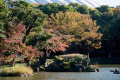都心紅葉名所巡り【小石川後楽園:蓬莱島の紅葉】20201128