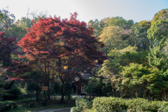 薬師池公園【旧荻野家周辺の紅葉】②20201115