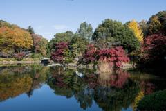 薬師池公園【薬師池周辺の紅葉】①20201115