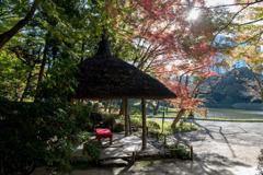 小石川後楽園【丸屋付近の紅葉】②20191130